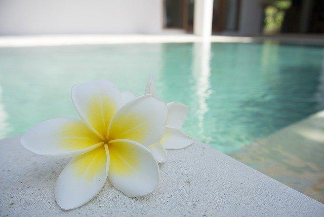 květina u bazénu.jpg