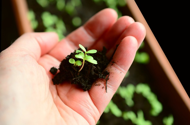 semenáčky v dlani