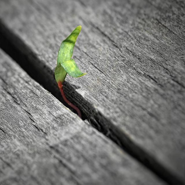 mladá rostlina mezi dřevem